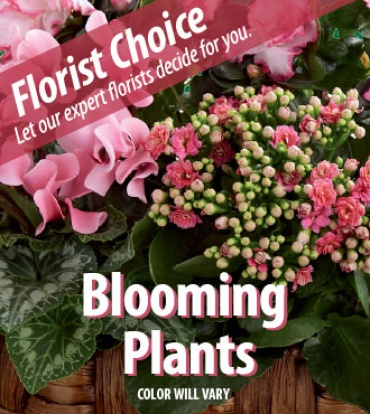 Growers Choice- Blooming Plant